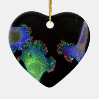 Fibroblastos embrionarios del ratón adorno navideño de cerámica en forma de corazón