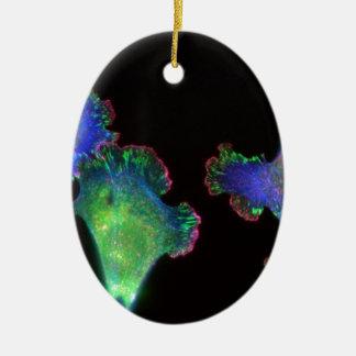 Fibroblastos embrionarios del ratón ornaments para arbol de navidad