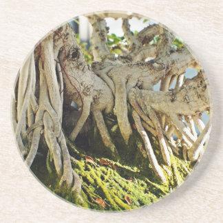 Ficus Banyan Bonsai Tree Roots Drink Coaster