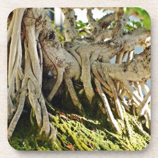 Ficus Banyan Bonsai Tree Roots Drink Coasters
