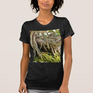 Ficus Banyan Bonsai Tree Roots T-Shirt