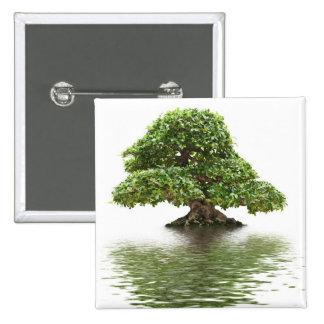 Ficus bonsai pinback buttons