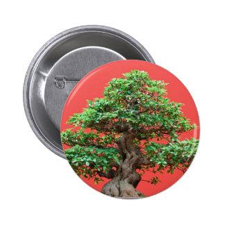 Ficus bonsai pins
