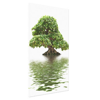 Ficus bonsai canvas print