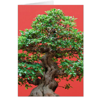 Ficus bonsai greeting card