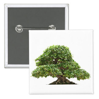 Ficus bonsai isolated buttons