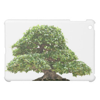 Ficus bonsai isolated cover for the iPad mini