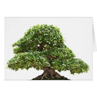 Ficus bonsai isolated greeting card