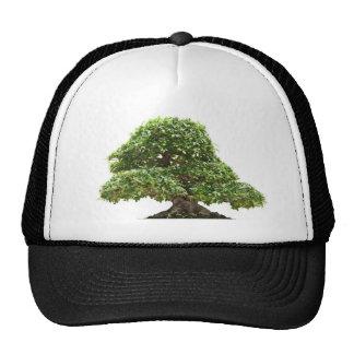 Ficus bonsai isolated trucker hat