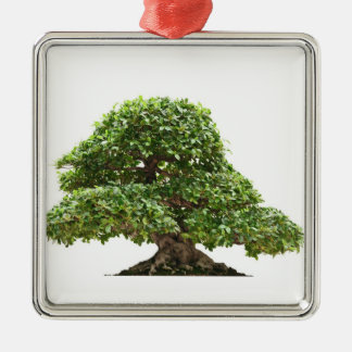 Ficus bonsai isolated square metal christmas ornament