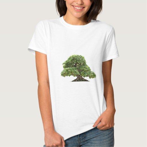 Ficus bonsai isolated tee shirts