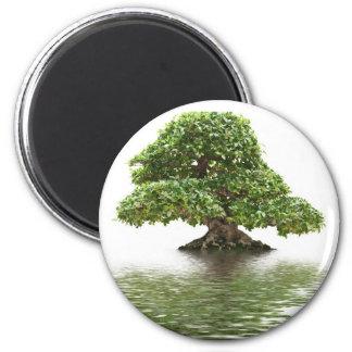 Ficus bonsai fridge magnet