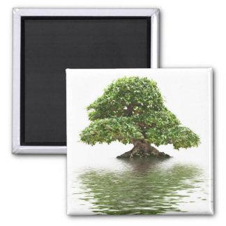 Ficus bonsai fridge magnets