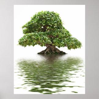 Ficus bonsai print