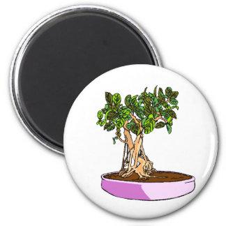 Ficus Bonsai Purple Tray Fridge Magnets
