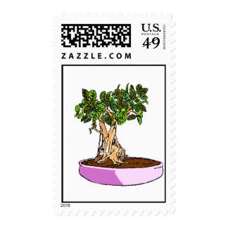 Ficus Bonsai Purple Tray Postage Stamps