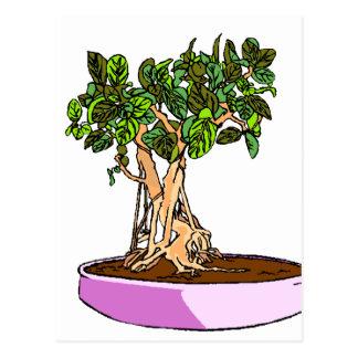 Ficus Bonsai Purple Tray Postcard
