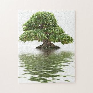 Ficus bonsai puzzle