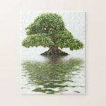 Ficus bonsai puzzles
