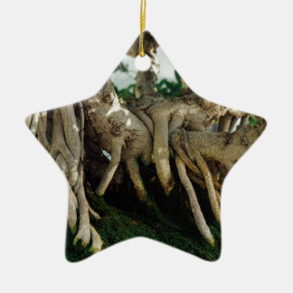 Ficus bonsai roots Double-Sided star ceramic christmas ornament