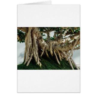 Ficus bonsai roots greeting card