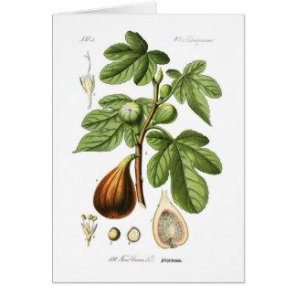 Ficus carica (Fig) Greeting Card