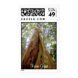 """""""FICUS GIANT"""" Stamps"""