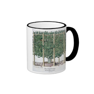 Ficus indica eystettensis, from the 'Hortus Eystet Coffee Mugs