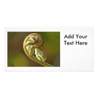 Fiddlehead Fern Photo Card