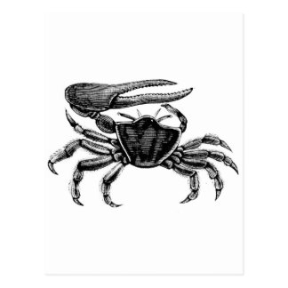 Fiddler Crab Drawing Postcard