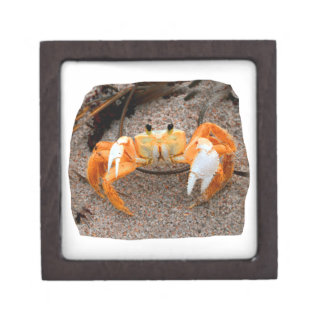 Fiddler Crab On Beach Colorized Orange Premium Gift Box