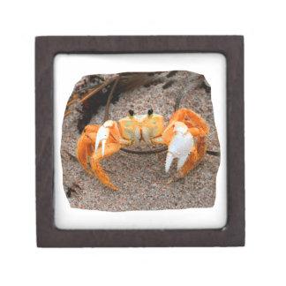 Fiddler Crab On Beach Colorized Orange Gift Box