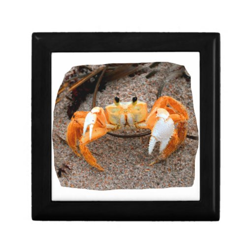 Fiddler Crab On Beach Colorized Orange Jewelry Boxes
