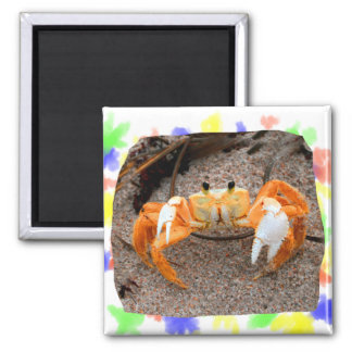 Fiddler Crab On Beach Colorized Orange 2 Inch Square Magnet