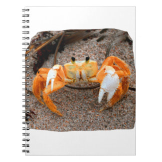 Fiddler Crab On Beach Colorized Orange Note Book