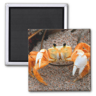 Fiddler crab on beach colorized orange on sand 2 inch square magnet