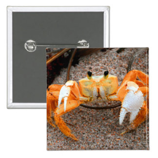 Fiddler crab on beach colorized orange on sand button