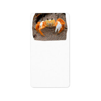 Fiddler crab on beach colorized orange on sand personalized address label