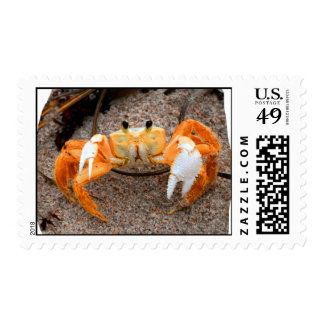 Fiddler crab on beach colorized orange on sand stamp