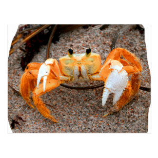 Fiddler crab on beach colorized orange on sand postcard