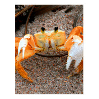 Fiddler Crab On Beach Colorized Orange Post Cards