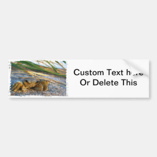 Fiddler crab on beach on sand bumper stickers