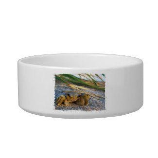 Fiddler crab on beach on sand cat food bowls