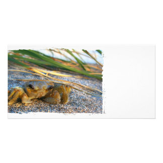 Fiddler crab on beach on sand custom photo card