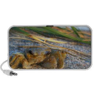 Fiddler crab on beach on sand travel speaker