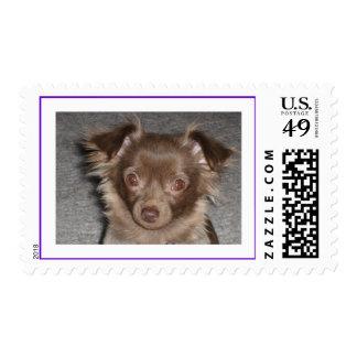 Fidget Postage Stamps