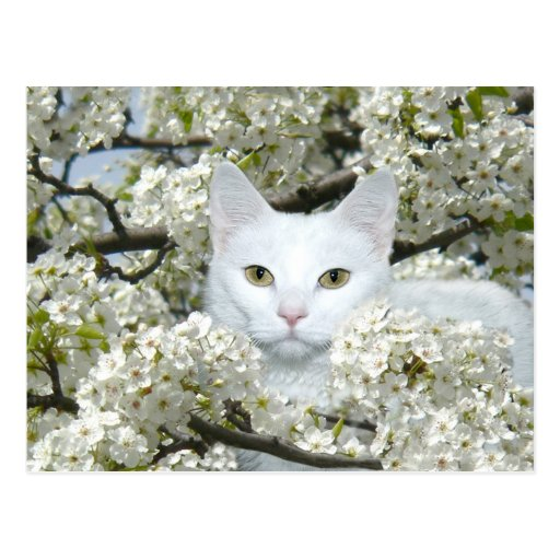 Fiebre de la primavera del gato postal