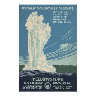 Fiel viejo del parque nacional de Yellowstone Cojinete