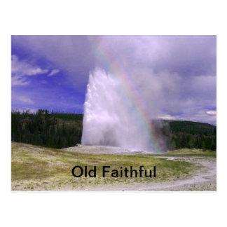 Fiel viejo en el parque nacional de Yellowstone Postal