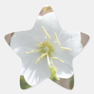 Field Bindweed Star Sticker